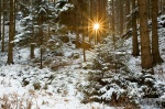forest, sunrise, national park, sun, sunstar, fir tree, schnee, sunrise, saxony, sachsen, germany, photo