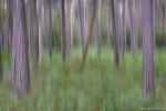 abstract, forest, coast, trees, farns, germany, 2016, photo