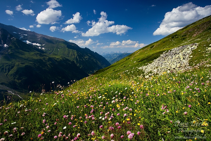 meadow, alpes, mountain, hohe tauern, national park, austria, photo