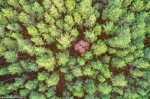 tree, forest, from above, drone, germany, 2020, photo