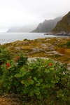 mountain, rain, rugged, shore, ocean, lofoten, norway, 2013, photo
