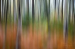 forest, abstract, national park, saxony, switzerland, germany, photo