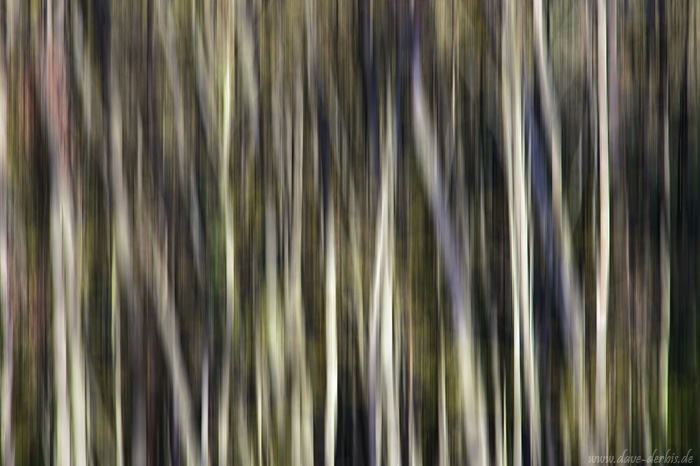 forest, abstract, golden hour, national park, germany, 2014, photo