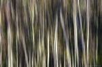 forest, abstract, golden hour, national park, germany, 2014, Abstract Forest Renditions, photo