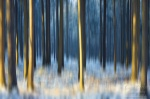 forest, abstract, national park, saxony, switzerland, germany, Abstract Forest Renditions, photo