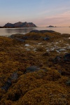 fjord, sunset, island, lofoten, norway, 2013, photo