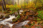 autumn, forest, foliage, stream, ilse, harz, germany, photo