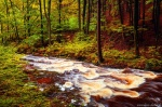 harz, forest, autumn, fall, creek, cascade, stream, mountains, germany, 2020, photo