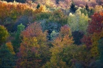 harz, selketal, autumn, forest, trees, wald, herbst, fall, national park, germany, Stock Images Germany, photo