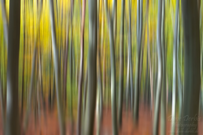 saxon switzerland, forest, abstract, autumn, germany, photo