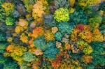 forest, autumn, fall, aerial, drone, harz, germany, 2020, photo