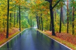 fall, foliage, autumn, forest, roadshot, road, october, germany, 2020, photo