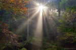forest, sun, sunstar, autumn, bohemian-switzerland, czech republic, 2014, photo