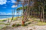 summer, beach, forest, wild, painting, baltic sea, germany, 2020, photo