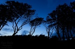beach, trees, silhouette, baltic sea, weststrand, blue hour, twilight, germany, 2011, photo