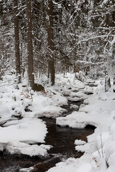 harz, winter, bode, snow, river, fir tree, germany, 2009, photo