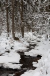 harz, winter, bode, snow, river, fir tree, germany, 2009, Landschafts Fotokalender Wildes Deutschland, photo