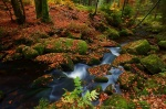 harz, autumn, river, forest, river, cascade, germany, 2012, photo