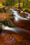 autumn, stream, forest, harz, national park, cascade, 2011, photo