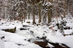 harz, winter, bode, snow, cascade, river, fir tree, germany, 2009, photo