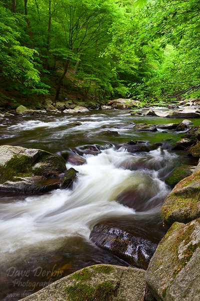 bode, river, thale, harz, forest, summer, germany, photo