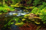 forest, stream, summer, river, cascade, bohemian switzerland, czech republic, 2020, photo