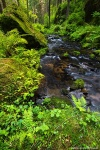 river, stream, summer, forest, bohemian switzerland, national park, czech republic, 2015, photo