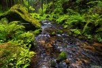 latest, river, stream, summer, forest, bohemian switzerland, national park, czech republic, 2015, Best Landscape Photos of 2015, photo