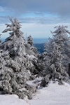 harz, winter, snow, brocken, fir tree, germany, 2009, photo