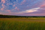 brumby, sunset, field, pink, cloud, wallpaper, photo