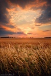 sunset, field, summer, corn, sun, rural, brumby, germany, photo