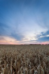 sunset, corn, field, twilgiht, germany, photo