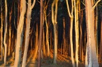 sunset, forest, trees, golden, nationalpark, germany, 2014, Stock Images Germany, photo