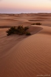 sunset, dunes, el oasis, maspalomas, gran canaria, desert, spain, Spain, photo
