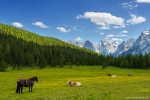 meadow, summer, alpine, mountains, cows, dolomites, italy, 2016, photo