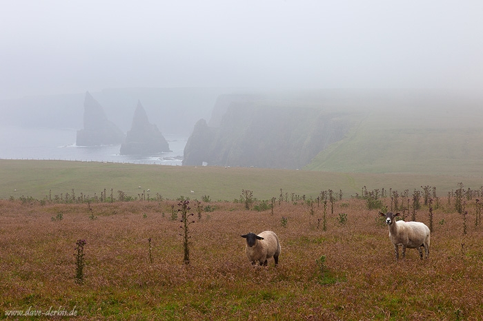rain, sheep, cliff, ocean, fog, scotland, 2014, photo