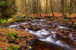 autumn, forest, stream, harz, bode, germany, 2015, photo