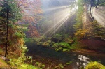 forest, sun, autumn, bohemian-switzerland, czech republic, 2014, Best Landscape Photos of 2014, photo