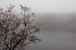fog, harz, lake, autumn, bush, germany, 2012, Autumn Season 2012, photo