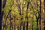 forest, autumn, harz, selke, germany, photo