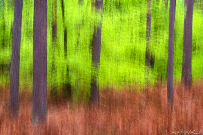 forest, abstract, national park, baltic sea, wild, germany, 2017, photo