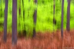 forest, abstract, national park, baltic sea, wild, germany, 2017, Abstract Forest Renditions, photo