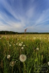 harz, meadow, blowball, dandelion, summer, flower, grass, friedrichsbrunn, Landschafts Fotokalender Wildes Deutschland, photo