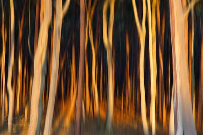 sunset, forest, abstract, baltic sea, golden, germany, photo