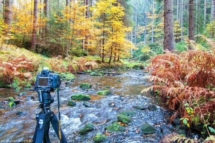 greetings, from, autumn, forest, river, bohemian switzerland, 2016, photo