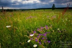 meadow, harz, summer, national park, sun beams, sachsen-anhalt, saxony-anhalt, germany, photo
