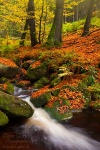 autumn, stream, forest, harz, dream, national park, cascade, braunlage, photo
