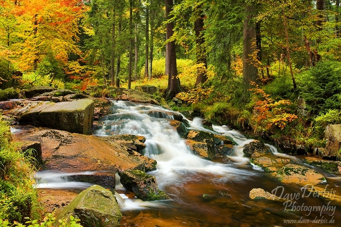 Autumn Stream Harz National Park Dave Derbis