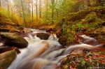 autumn, stream, forest, harz, national park, cascade, ilse, ilsenburg, photo