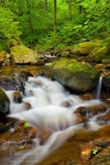 harz, ilse, stream, ilsetal, sachsen-anhalt, ilsenburg, summer, creek, cascade, national park, germany, photo